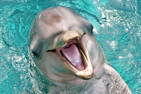 Flipper Theme Song